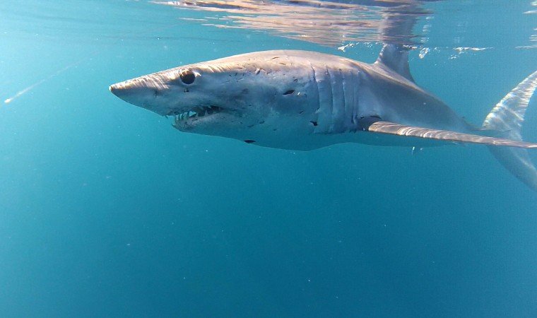 4. Mako shark that came to visit Nathan