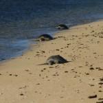 Sleeping female turtles