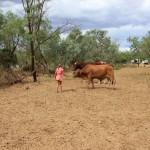 Elokin feeding the cow