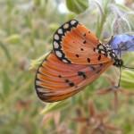 Elokin's photo of the butterfly