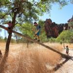 Elokin, Nath and Hendrix found a tree to climb
