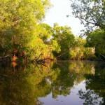 Wildman River